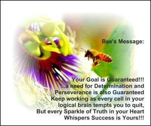 Bee's Message