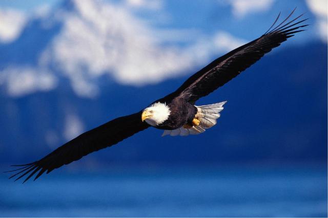 Eagle_Soar1